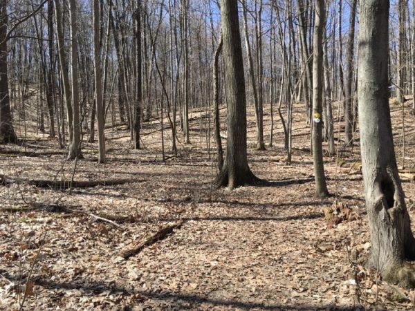 Warbler Woods Trail