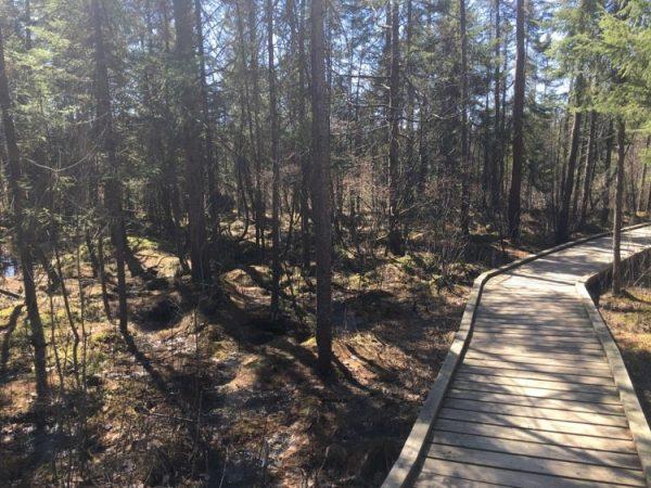 Sifton Bog Dock Trail