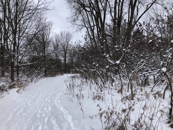 The Coves Trails