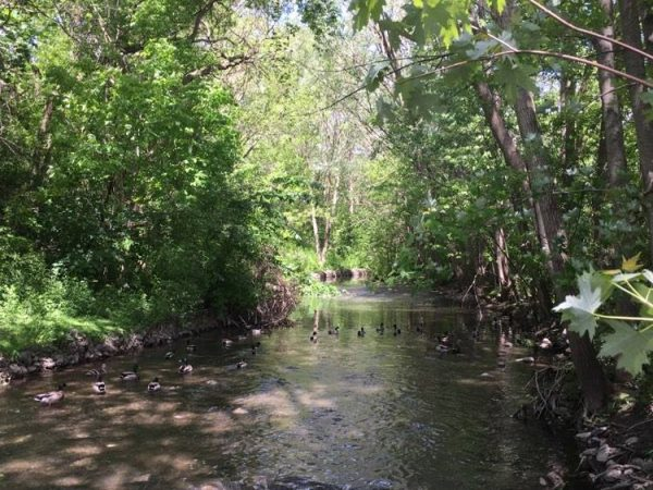 Pottersburg Creek, Kiwanis Park
